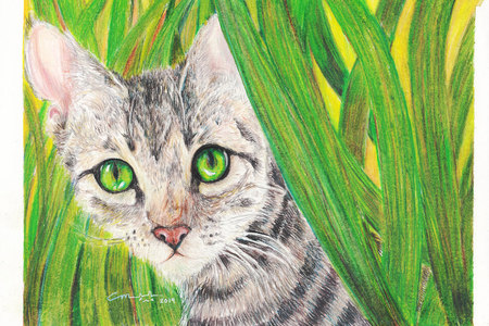 Natural Illustration (Flora and Fauna)
