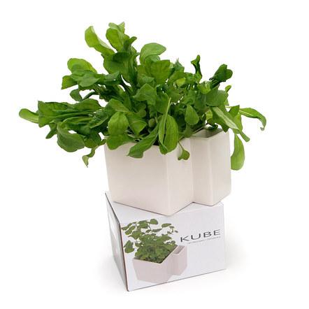 Kube herb pot