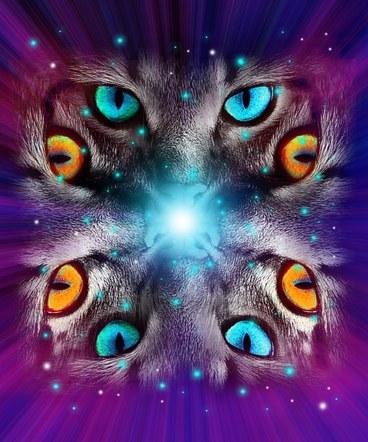 cat eyes hoodie