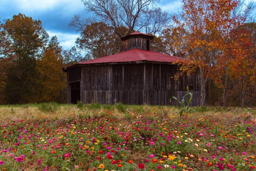 Round Barn Autumnal Blooms