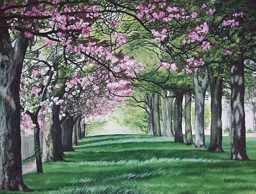 Cherry Blossom in Victoria Park, Edinburgh, Scotland