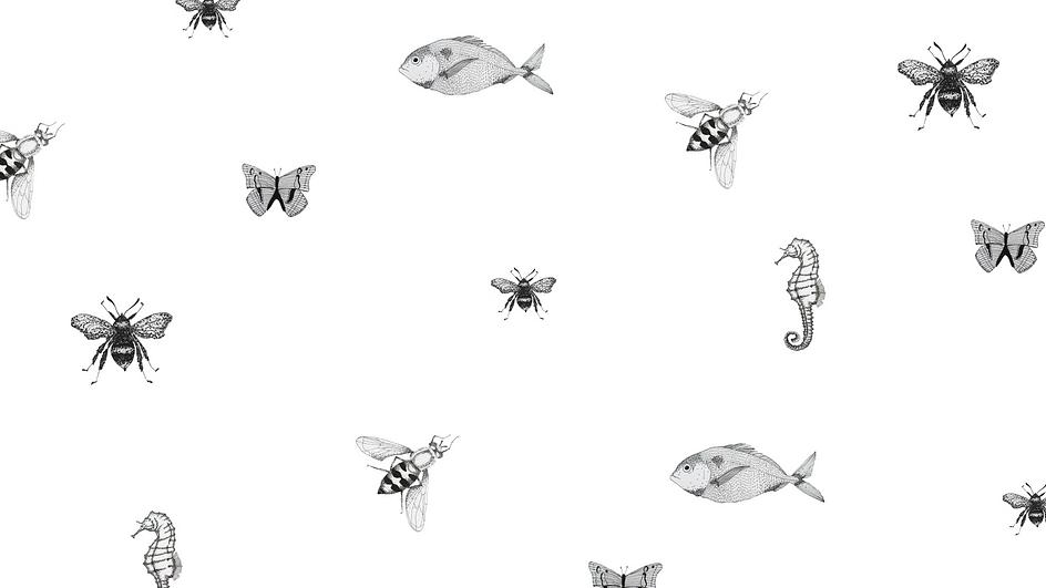Illustrations by hand-digitalised