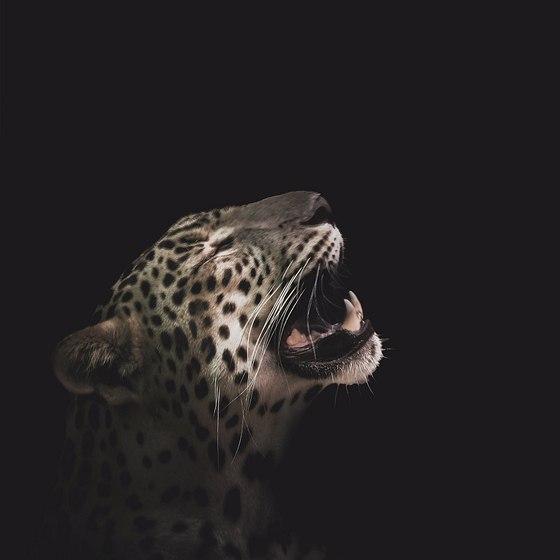 Animals : Fine Art Portraits